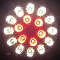 画像2: 食品用高演色LEDスポットライト200W形(鮮魚用)